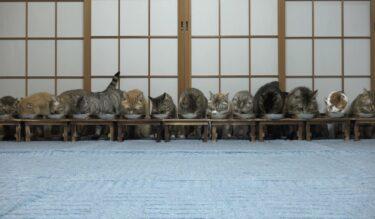 かわいい子猫のシンクロ動画おすすめランキング!【動物スクープ100連発】